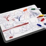 set en silicone à colorier Savane