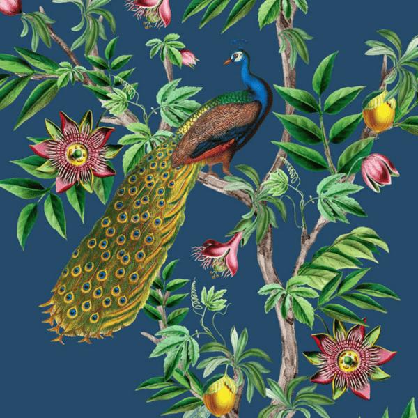 papier peint passion peacock 4
